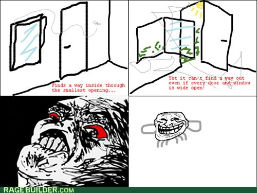 bugs fly Rage Comics raisin rage - 6236013312