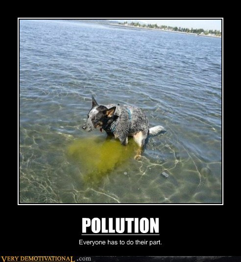 dogs eww hilarious pollution poop water - 6236048384