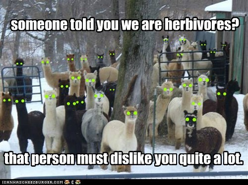 dislike,eating you,glowing eyes,herbivores,llamas,scary