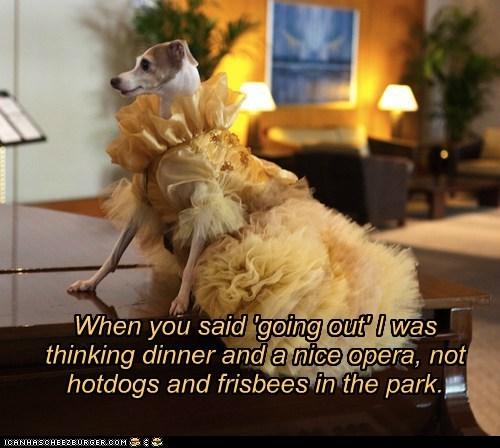 costume dogs dress fancy whippet - 6236346880
