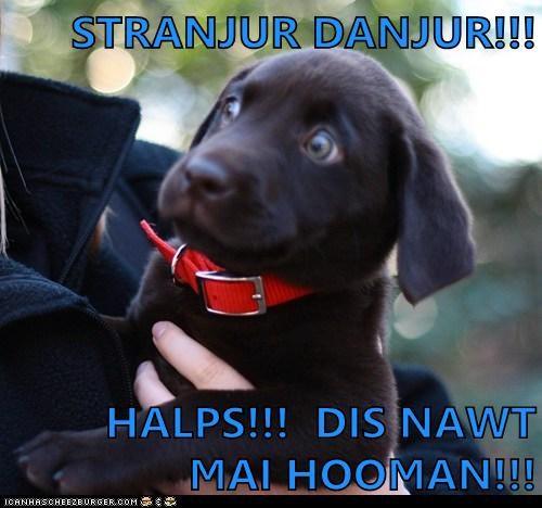 help lab puppy - 6236383488