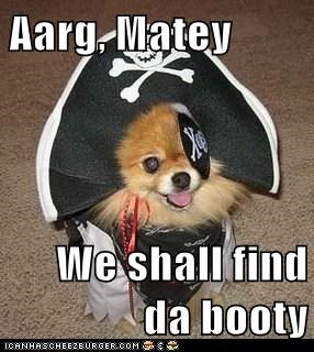 booty costume dogs Pirate pomeranian - 6236420608