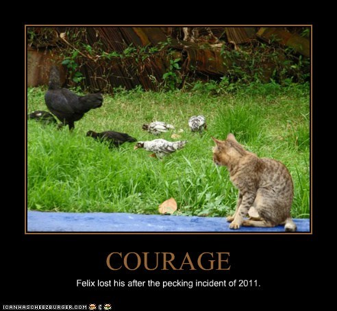 COURAGE Felix lost his after the pecking incident of 2011.