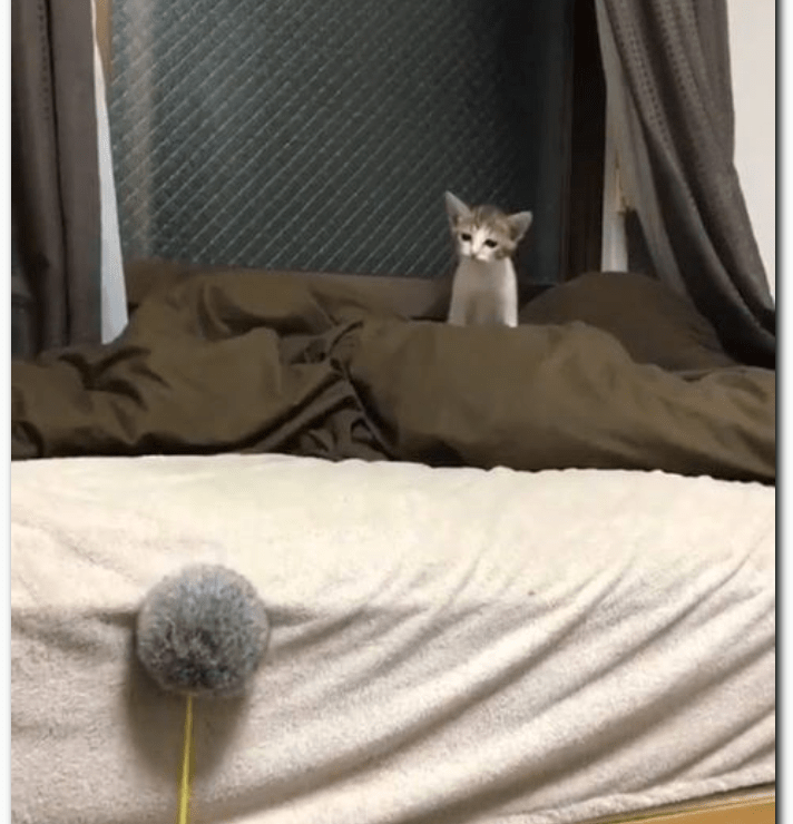 instagram videos of cats