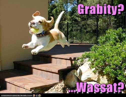 beagle fetch flying Gravity tennis ball - 6237150720