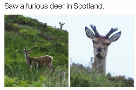 funny memes Memes animal memes animals - 6237189