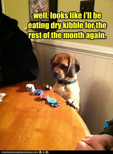 dogs losing poker puggle unlucky