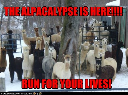 alpaca alpacalypse alpacas apocalypse best of the week gang Hall of Fame llamas puns run scary - 6237325824