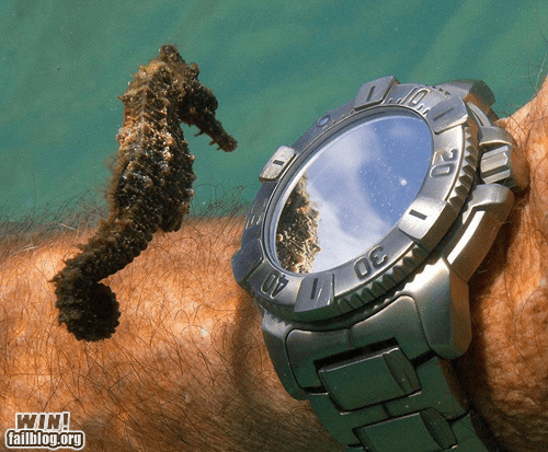animals diving photography seahorse - 6237371904