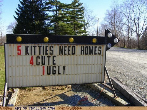 Cats,for sale,IRL,sign,ugly
