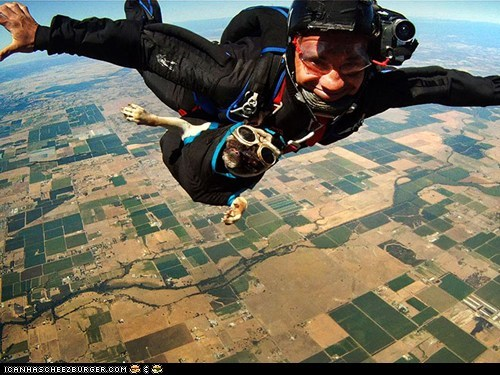 around the interwebs dogs people pets pugs skydiving - 6237585408