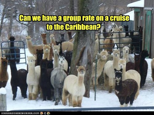Can we have a group rate on a cruise to the Caribbean?