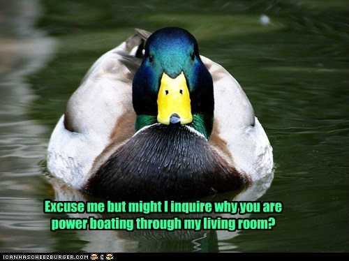 boating,duck,excuse me,home,living room,pond,power