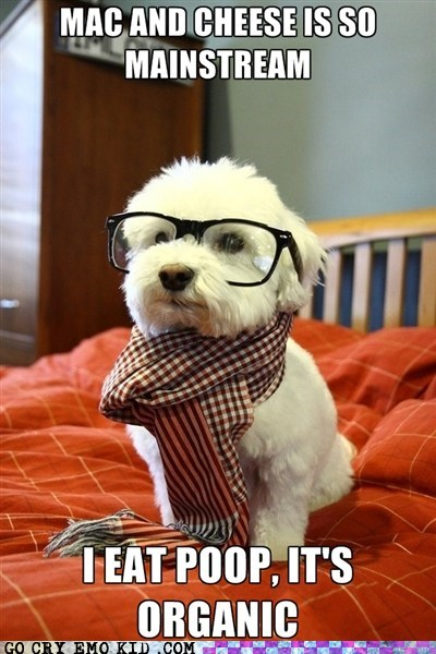 best of week,healthy,Hipster Dog,hipsterlulz,mainstream,organic