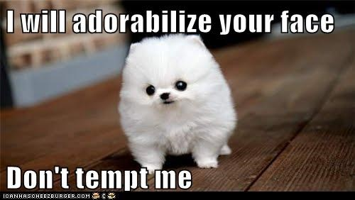 Adorable Dog,best of the week,dogs,dont-tempt-me,Hall of Fame,pomeranian,puppy,your face