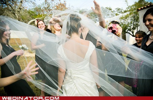 bride funny wedding photos veil - 6238354432