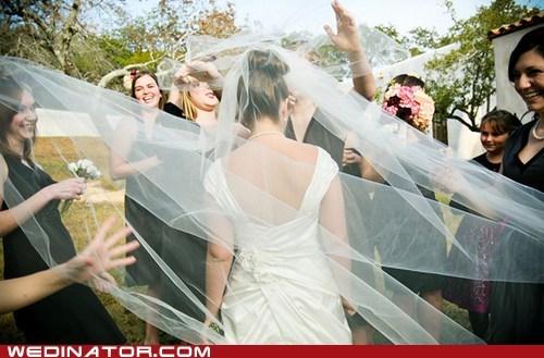 bride funny wedding photos veil - 6238354432