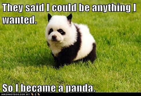 best of the week chow chow dogs Hall of Fame panda they said i could be anyt they said i could be anything - 6238459648