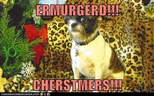 Cheezburger Image 6238549248