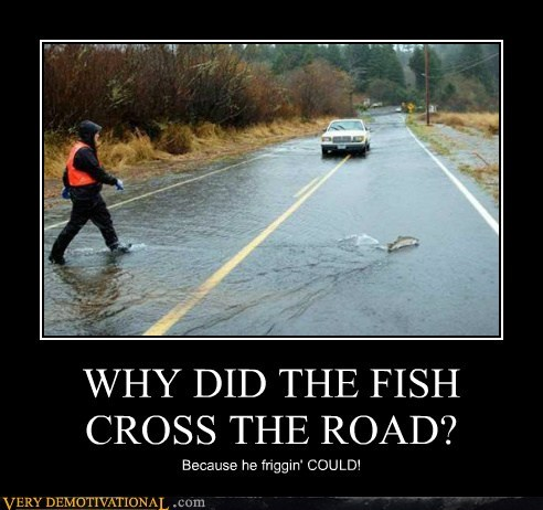 chicken cross fish hilarious joke road - 6239059456
