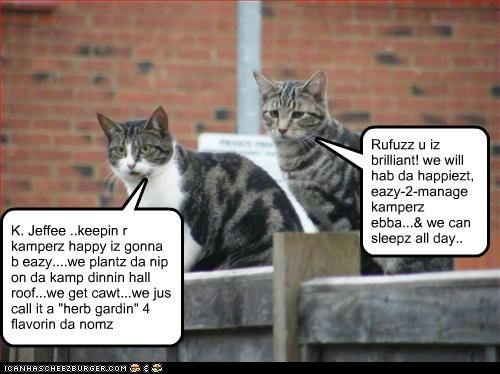 """K. Jeffee ..keepin r kamperz happy iz gonna b eazy....we plantz da nip on da kamp dinnin hall roof...we get cawt...we jus call it a """"herb gardin"""" 4 flavorin da nomz Rufuzz u iz brilliant! we will hab da happiezt, eazy-2-manage kamperz ebba...& we can sleepz all day.."""