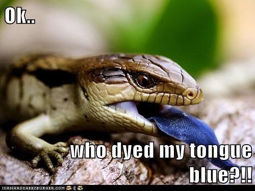 Ok.. who dyed my tongue blue?!!