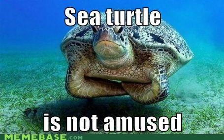 Memes sea seahorse seahell shell turtle - 6239861504