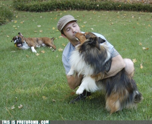 Animal Bomb animals derp dogs pets - 6240090624
