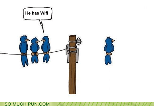 bird birds Hall of Fame standing wifi wire wireless - 6240116736