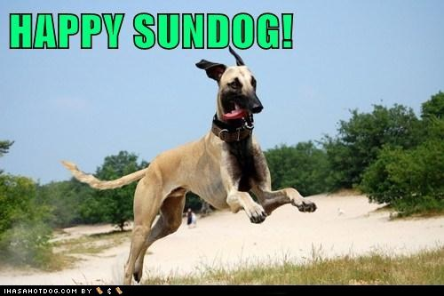 dogs greyhound sunday Sundog - 6240365312