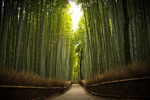 bamboo,Forest,Hall of Fame,Japan,Kyoto