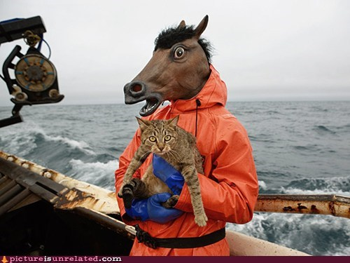 boat cat fishing ocean wtf