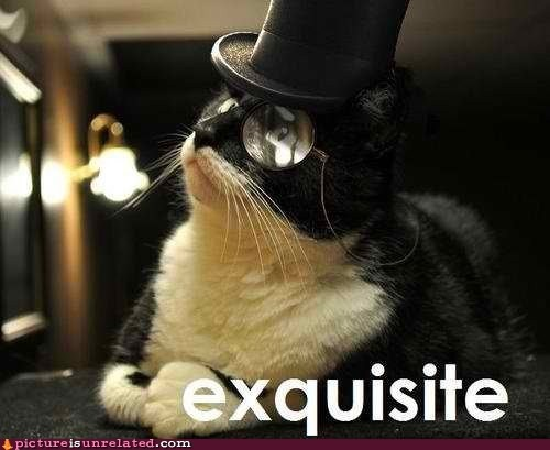 best of week Cats exquisite sir top hat wtf - 6240893440
