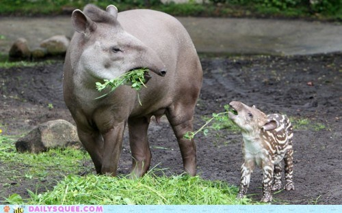 baby,greens,mommy,tapir,veggies