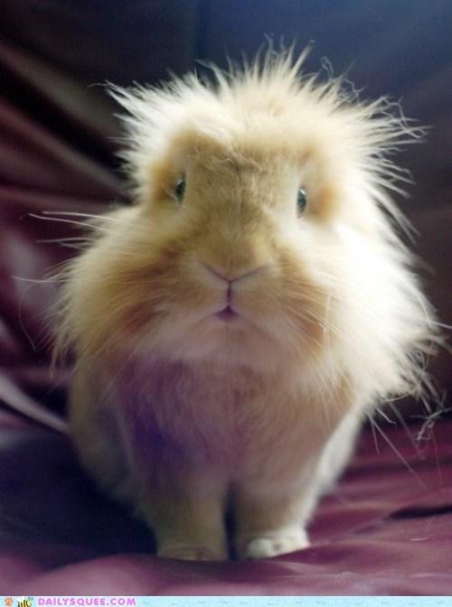 bunny ears Fluffy fur - 6241089792