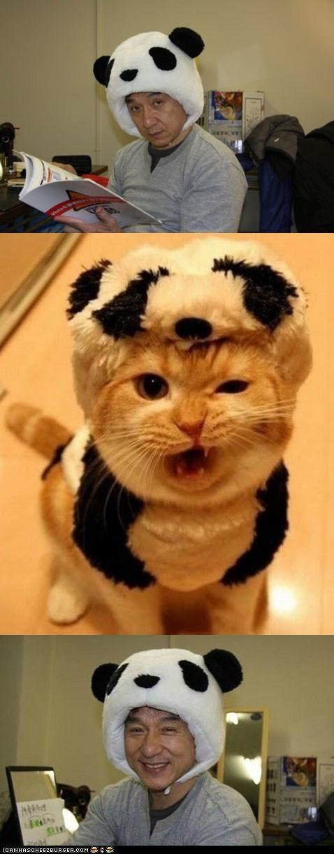Cats,Jackie Chan,memebase,multipanel,panda bears,panda hat,panda