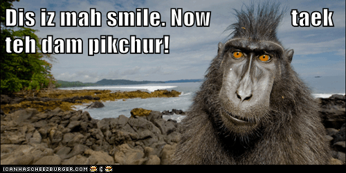annoyed,happy face,impatient,monkey,smile,take a picture