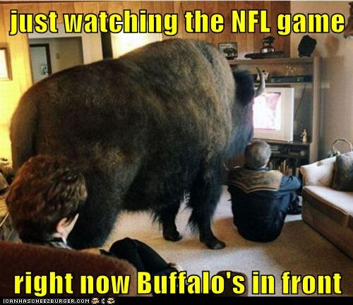 buffalo football in front living room nfl sports TV watching TV - 6241477120