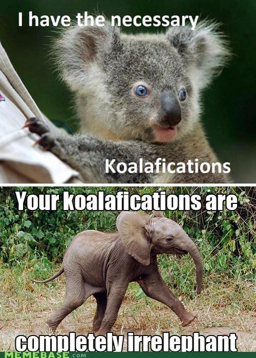 elephant,koala,Memes,puns