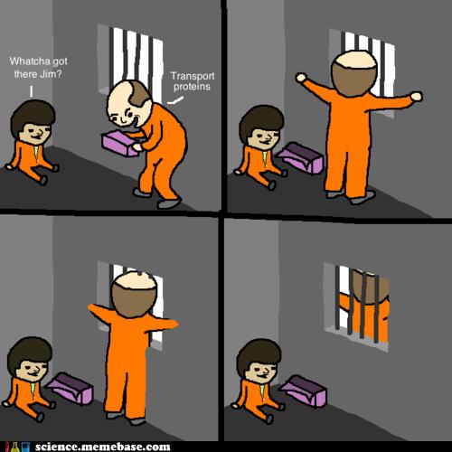 Life Sciences prison proteins transport - 6241672192