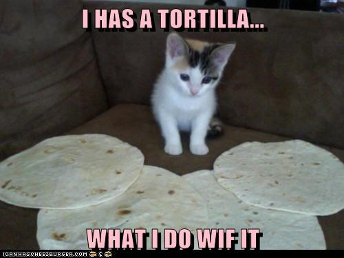 best of the week confused food nom tortilla what do i do wut - 6241758208