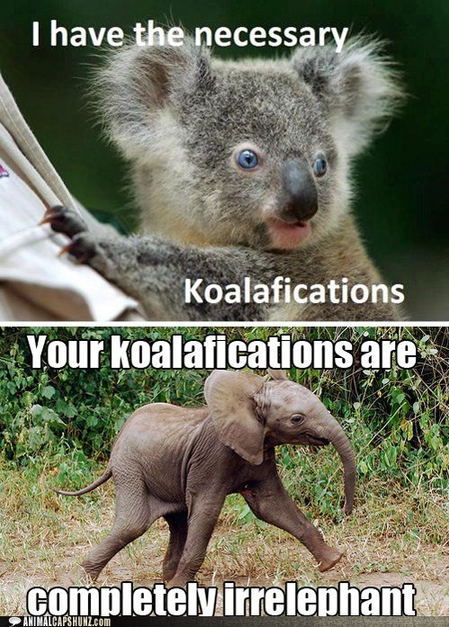 elephant,irrelevant,koala,puns,qualifications,response,strut