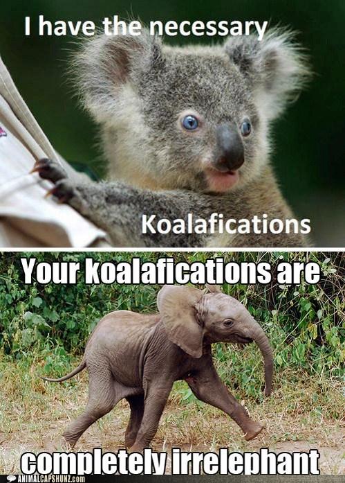 elephant koala puns response strut - 6241801728