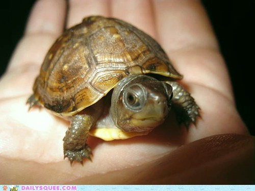 pet reader squees tiny tortoise - 6241844480