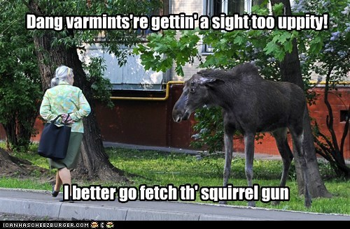 Dang varmints're gettin' a sight too uppity! I better go fetch th' squirrel gun