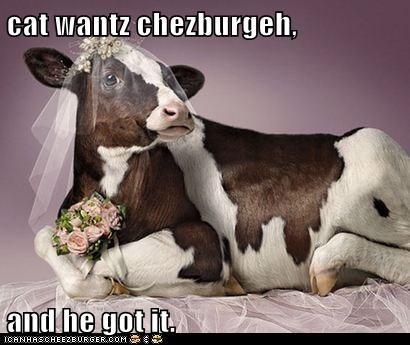 Cheezburger Image 6242022400