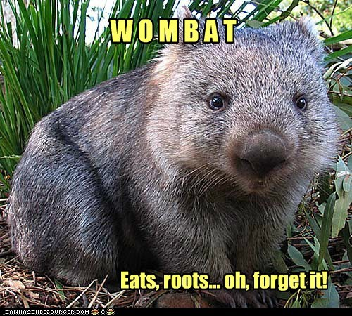 grass roots Wombat - 6242104064