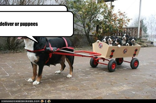 i has deliver ur puppees i has deliver ur puppees