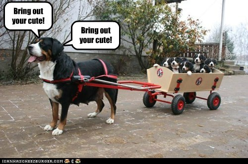 bring out your dead cute dogs monty python puppy wagon what breed - 6242391040