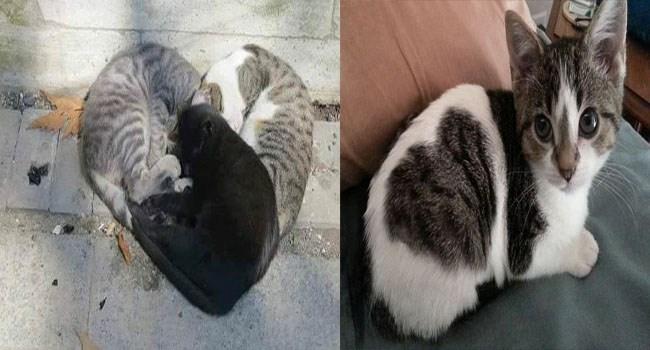 cats shaped like hearts